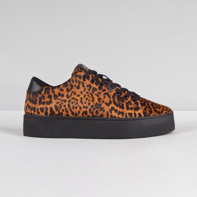 Hook Plateau Leopard